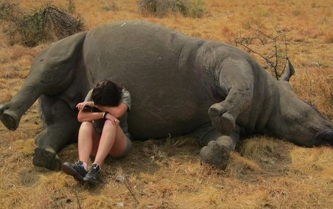 Photo of Wildlife Reserve Worker Weeping Next to Poached Rhino Shows the Impact of Our Greed | What's Happening to Africa's Rhino? | Scoop.it