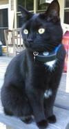 Feline Odyssey Shows Importance of Micro-Chipping - The Daily Harrison   Cats Rule the World   Scoop.it