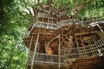 Vivre dans un arbre-cathédrale aux Etats-Unis | Tout le web | Scoop.it