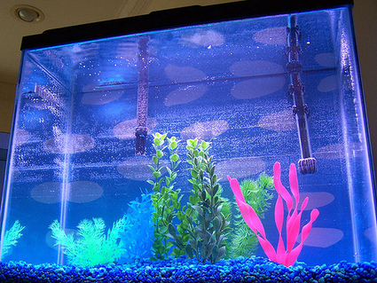 Fish Aquarium: The Vastu Master-key of Success and Harmony | Vastu Shastra | Scoop.it