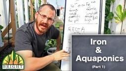 Understanding Ammonia in Aquaponics - Vertical Food Blog | Vertical Aquaponics | Scoop.it