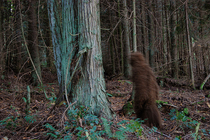 Designers of Game-Based Learning: Do They Exist or Are They Bigfoot?   SweetRush   JRD's educational gaming   Scoop.it