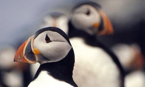 Fears for seabirds as global warming affects coastline | Environment | Scoop.it