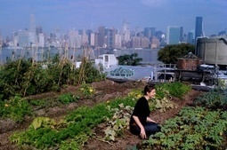 New York City could open up 1,200 acres of rooftops for farming | Vertical Farm - Food Factory | Scoop.it