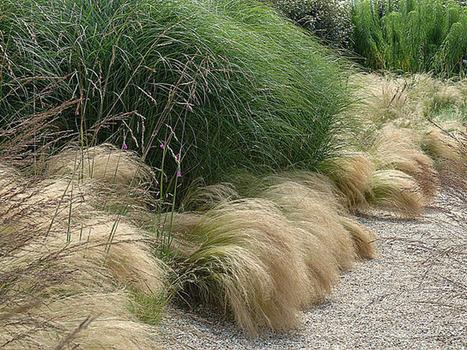 Les graminées d'ornement | jardins et développement durable | Scoop.it