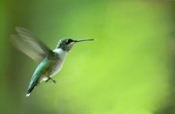 What Does Google's Hummingbird Update Mean For Your SEO Efforts? Nothing | Marketing in English | Scoop.it
