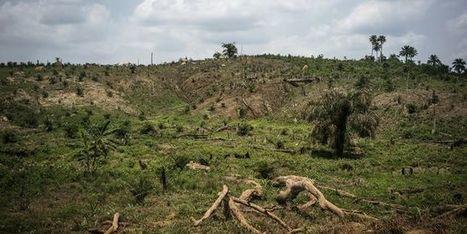 Nourrir l'humanité sans détruire de nouvelles forêts   Sustainable imagination   Scoop.it