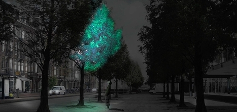Le designer Daan Roosegaarde veut transformer les arbres en lampadaires grâce à la bioluminescence | Design de politiques publiques | Scoop.it
