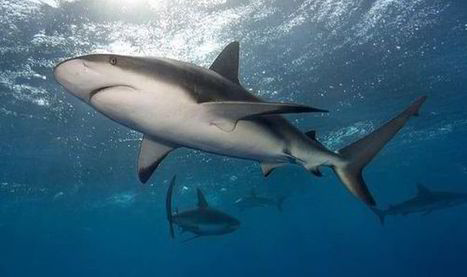Fear of sharks is worse than their bite - so why are we scared to get back in ... - Express.co.uk | Coral Reef Ecology | Scoop.it