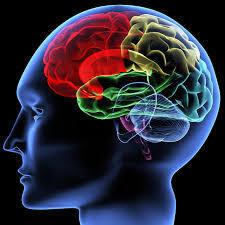 Understanding Brains: Details, Intuition, and Big Data | Bits 'n Pieces on Big Data | Scoop.it