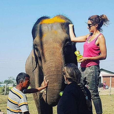 Nepal Shows the Way in Ethical Elephant Tourism | Pachyderm Magazine | Scoop.it