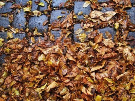 Les villes se mettent au recyclage des feuilles mortes | Total Visits 565 | La part du colibri | Remue-méninges FLE | Scoop.it