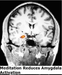 La MÉDITATION modifie durablement le cerveau et les émotions – Frontiers in Human Neuroscience | Santé blog | (en)quête de soi | Scoop.it