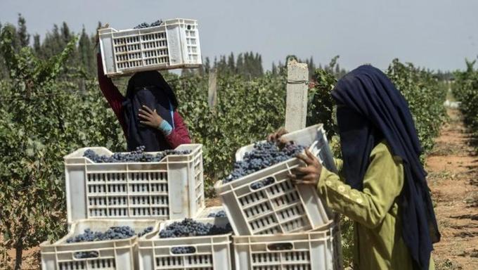 Fruits et légumes d'Egypte: un appétit croissant malgré les défis sanitaires