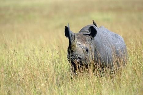 Les espèces animales menacées expliquées aux enfants | Olisoca40 | Scoop.it
