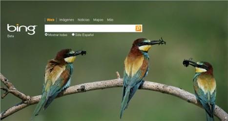 Renouvellement des accords entre Bing et Twitter | SocialWebBusiness | Scoop.it