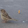 Birdwatching and habitat