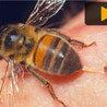 African Organic Honey