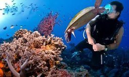 Great Barrier Reef: the scale of bleaching has the most sober scientists worried | Teaching Science | Scoop.it