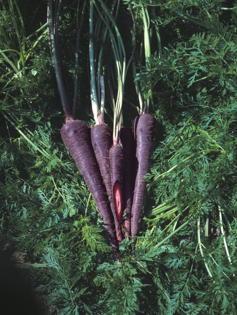 Contain your Enthusiasm for Vegetable Gardening | School Gardening Resources | Scoop.it