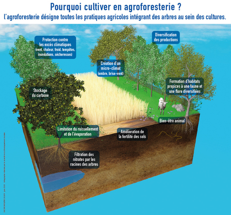 Paysan en agroforesterie - Participez à la transition énergétique pour la croissance verte | Sustainability: Permaculture, Organic Gardening & Farming, Homesteading, Tools & Implements | Scoop.it
