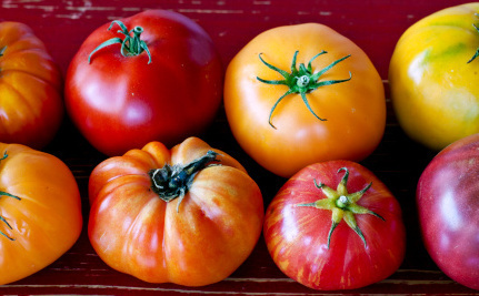 It's Here! The Flavorful, Sustainable Winter Tomato - Care2.com (blog) | Vertical Farm - Food Factory | Scoop.it