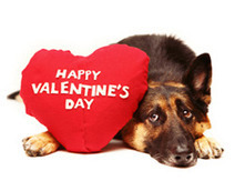 ASPCA | ASPCA Guide to a Pet-Friendly Valentine's Day | Responsible Pet Parenting | Scoop.it