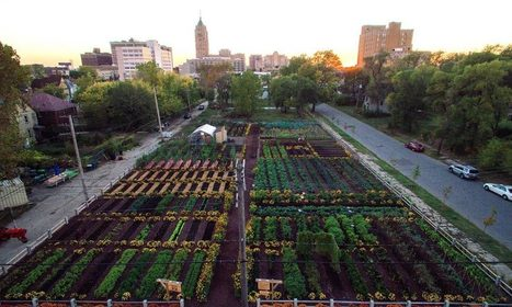 First Urban 'Agrihood' In America Feeds 2,000 Households For Free | Pourquoi's innovation and creativity digest | Scoop.it