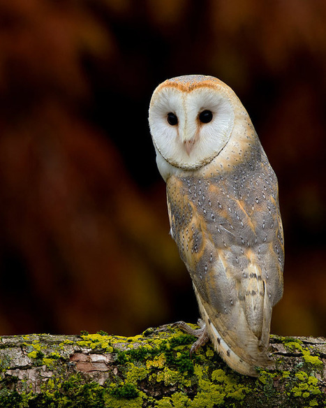 Wildlife Photography: Dennis Binda - Smashing Picture|Smashing Picture | Sauvegarde et Protection des animaux | Scoop.it