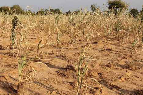 UN food agency warns of danger to croplands in Mali and Niger ... | International Development and Peace | Scoop.it