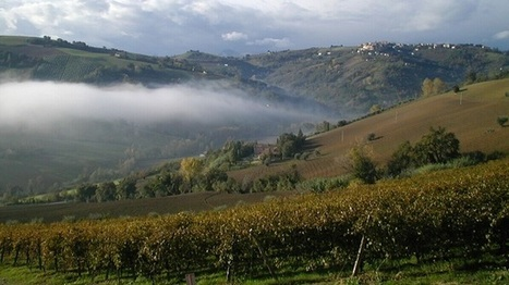 Wines from the Marche: serious matter | Wine, history and culture... | Scoop.it