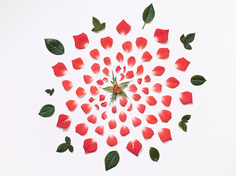 exploded flowers by fong qi wei | Live mathematics! | Scoop.it