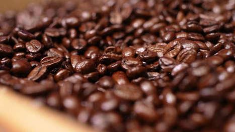 Le génome du café arabica séquencé en vue de sa préservation | Attitude BIO | Scoop.it