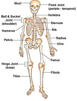 Your Bones   The Education STREaM  Inc