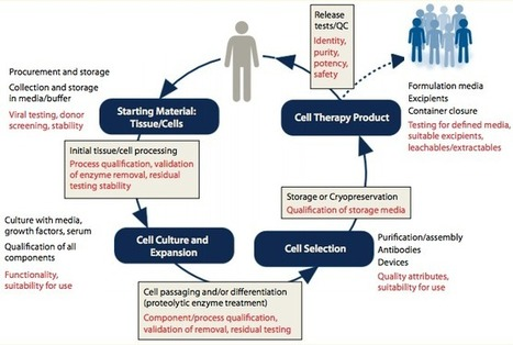 Standartization issues to be taken care for the development of cell therapy products | Tissue  and organ Engineering and Manufacturing | Scoop.it