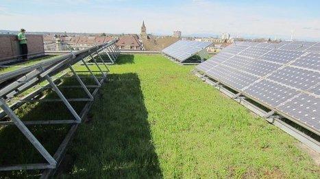 La biodiversité sur nos toits, l'écologie prend de la hauteur !   Sustain Our Earth   Scoop.it