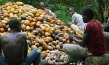 New cocoa business model catching on | sustainable branding | Scoop.it