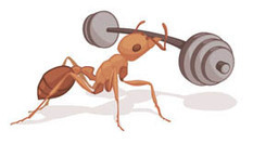 Ant Factoids | ASU - Ask A Biologist | All About Ants | Scoop.it