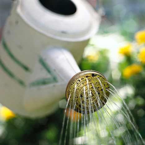 August Gardening Tips for the Pacific Northwest   Garden Ideas by Team Pendley   Scoop.it
