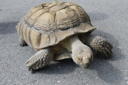 Don't Voice Like the Tortoise or the Hare | Breaking Into Voice Over | Scoop.it