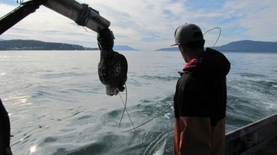 Coal Ships And Tribal Fishing Grounds | Sustain Our Earth | Scoop.it