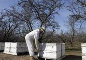 California almonds threatened by fewer bees | Vertical Farm - Food Factory | Scoop.it