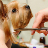Bow Wow Pet Grooming & Kennel