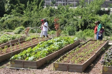 Urban Agriculture: New ordinances promote city farming - Atlanta INtown Paper | Cultivos Hidropónicos | Scoop.it