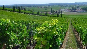 French harvest set for 13% increase on 2012 | 'Winebanter' | Scoop.it