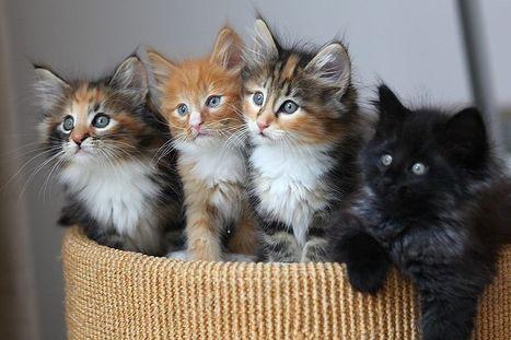 Ça marche aux poils #2 : Trois p'tits chats, chats, chats | Les chats c'est pas que des connards | Scoop.it