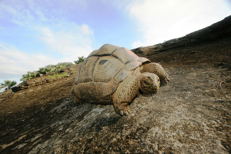 Fact or Fiction?: The Sixth Mass Extinction Can Be Stopped | Wild Resiliency | Scoop.it