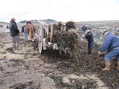 La filière algues de la presqu'île sur TV5 monde , Pleudaniel 15/01/2013 - ouest-france.fr   Bretagne Actualités Tourisme   Scoop.it