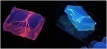 Researchers use 3-D printing to create synthetic blood vessels | Pharma strategy digest | Scoop.it