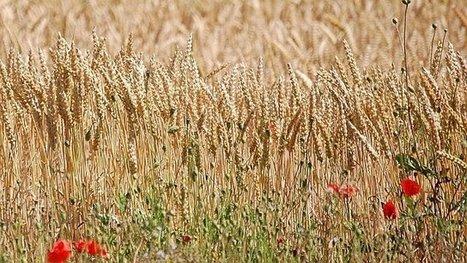 Une vision positive sur l'agriculture, thème d'un film à voir sur France 3 – salon de l'agriculture - France 3 Haute-Normandie | CAP21 | Scoop.it